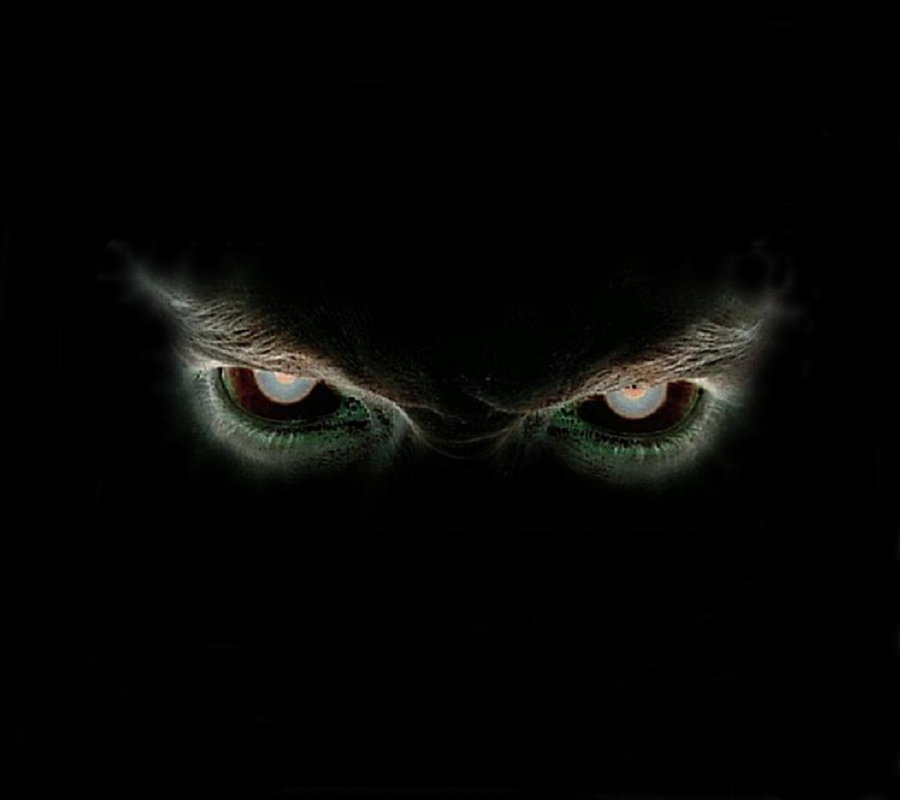 Eyes In The Dark Cat